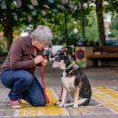 Pet friendly aged care facilities